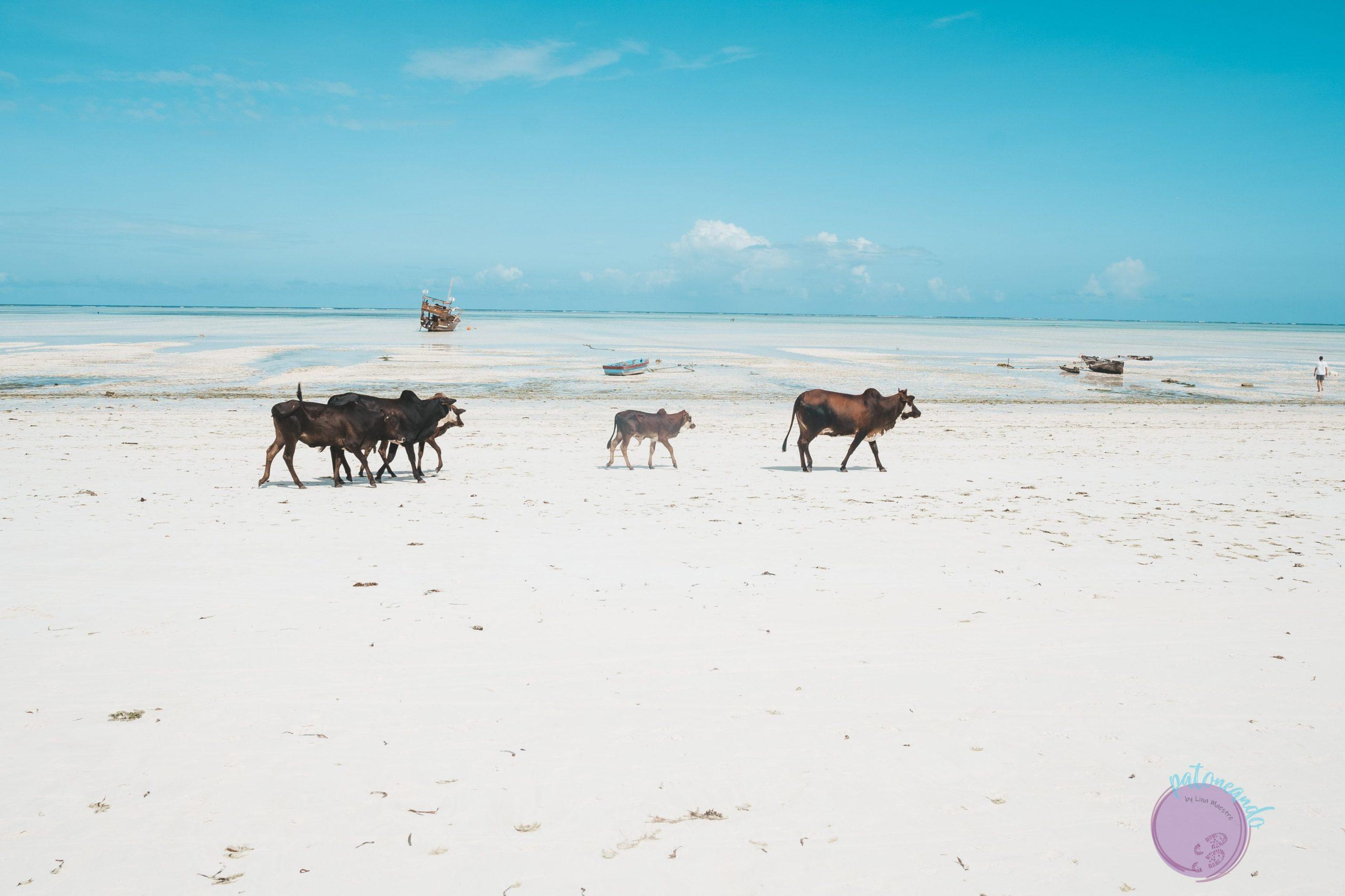 Guía para viajar a Kenia (consejos y varias ideas de rutas)